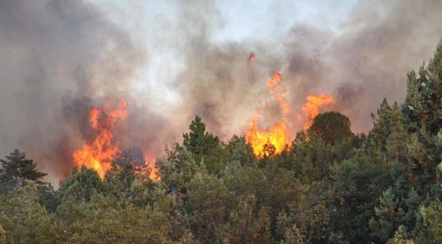 Bulgaristan ın 12 ilinde yangın tehlikesi var